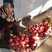 Pomegranate Row
