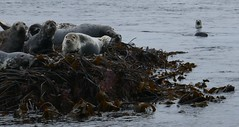 Seaweed Seals
