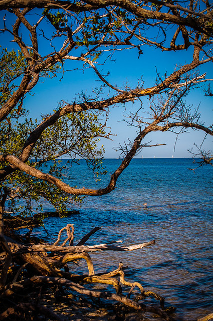 Reaching for the water - Riverview Pointe Preserve & Desoto National_