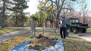 Eye on UMSL:  Planting Spring gifts:  Nov. 30, 2017