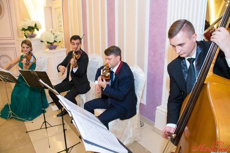 New Select Strings Quartet