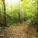 Autumn path #1