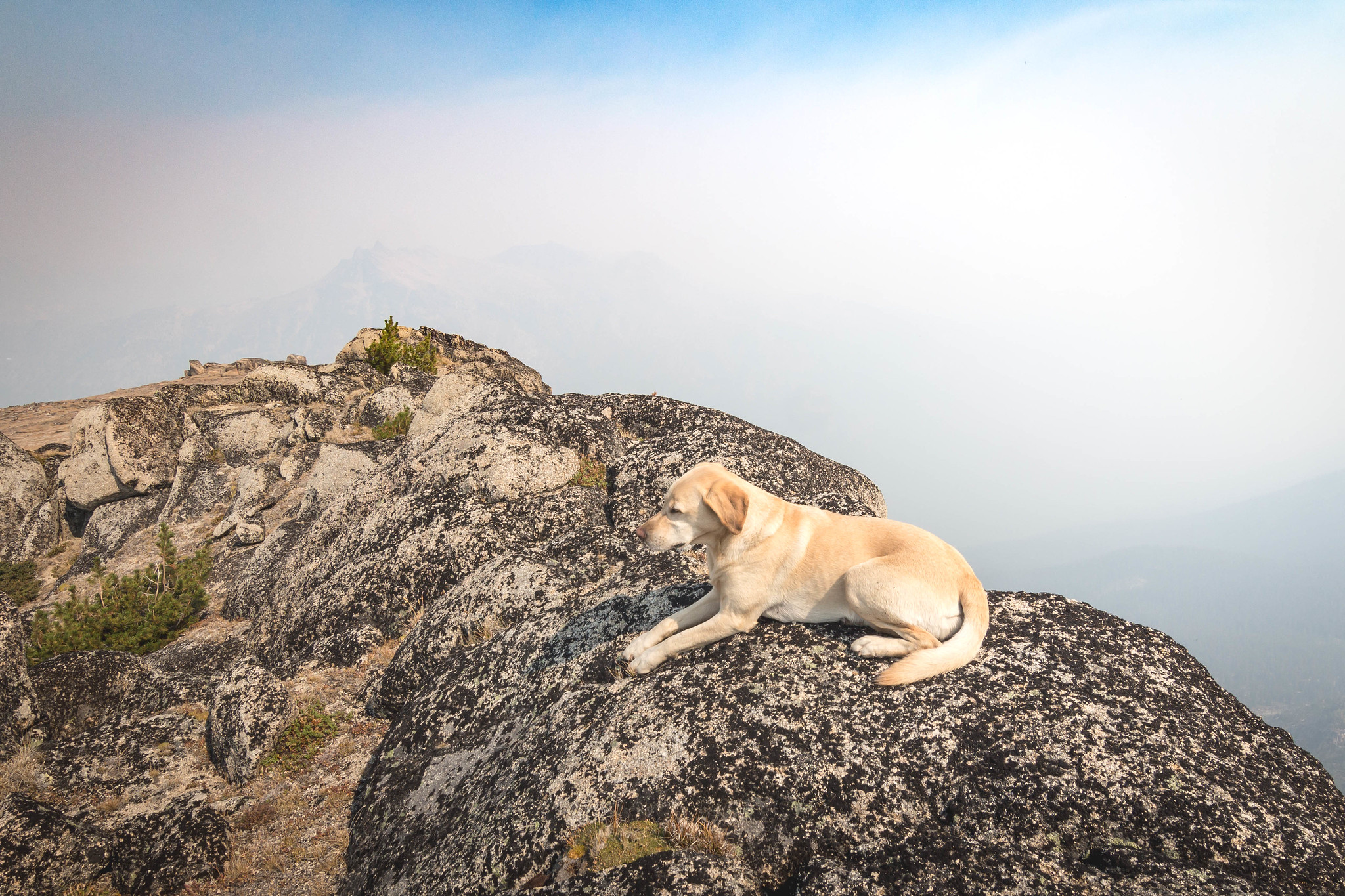 Summit dogs on Wolframite Mountain