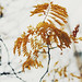 Autumn Leaves by Kristybee