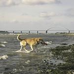 2011-09-06_11-53-41 - Hund hat Spaß am Fehmarnsund