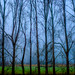 Fog and Dyke Road Trees