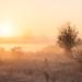 Sunrise in the Mist [Explored 10.11.17]
