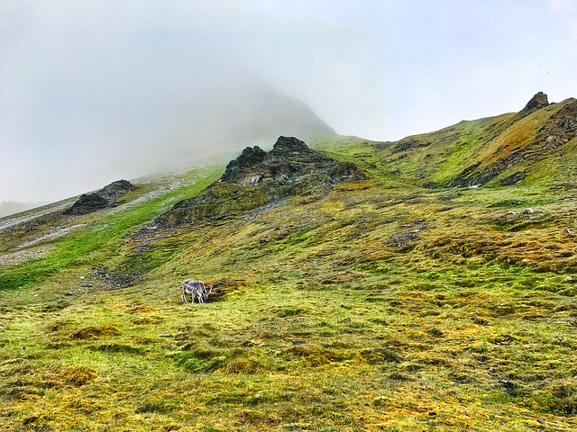 Mountains on Sandsøya (Svalbard) with Reindeer