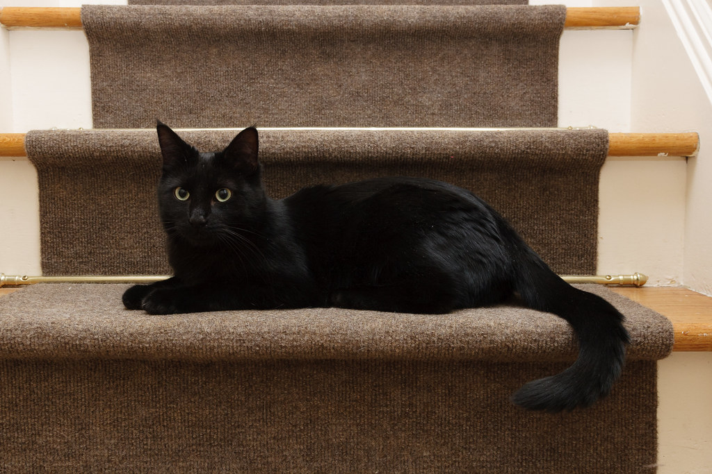 Our black cat Emma sitting on the stairs