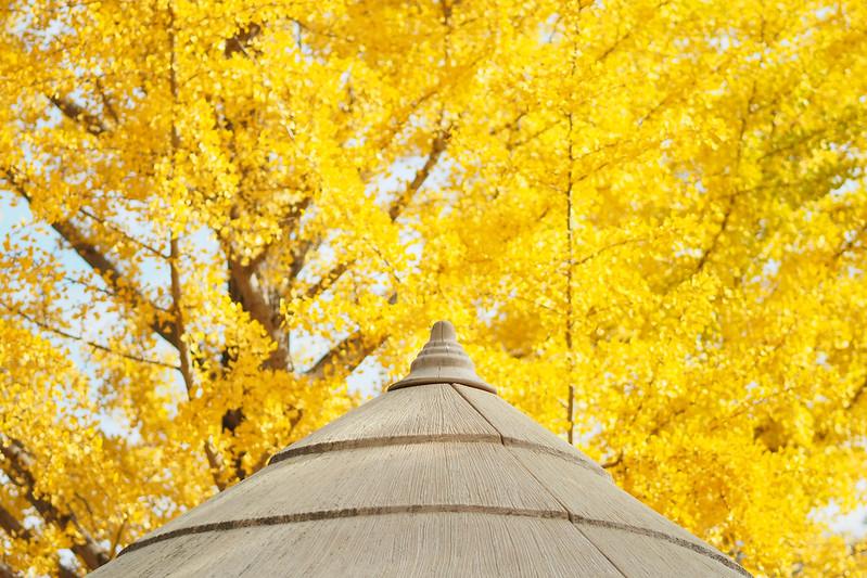 黃金天空|小淘氣廣場