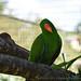 <p><a href=&quot;http://www.flickr.com/people/140820502@N08/&quot;>exploreslk</a> posted a photo:</p>&#xA;&#xA;<p><a href=&quot;http://www.flickr.com/photos/140820502@N08/24142367547/&quot; title=&quot;possing parrot&quot;><img src=&quot;http://farm5.staticflickr.com/4552/24142367547_1a76cf378a_m.jpg&quot; width=&quot;240&quot; height=&quot;160&quot; alt=&quot;possing parrot&quot; /></a></p>&#xA;&#xA;<p>Click to read more on <a href=&quot;http://exploreslk.com/dehiwala-zoo/&quot; rel=&quot;nofollow&quot;>Dehiwala Zoo</a>. <br />&#xA;<br />&#xA;Feel free to use this image, but give credits to <a href=&quot;http://exploreslk.com/&quot; rel=&quot;nofollow&quot;>exploreslk.com</a>.</p>