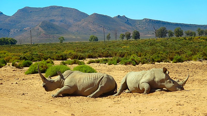 Safari Aquilla Game Park Cape Town