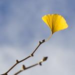 Light+in+a+Leaf