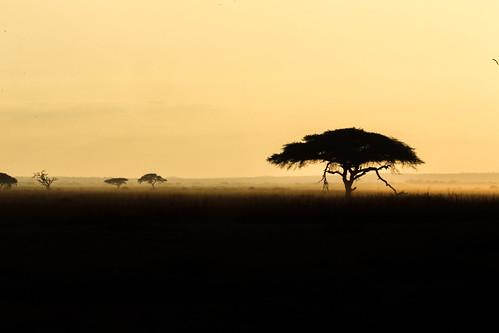kenya africa animali animals vacanza safari vacanze mare travel traveling holiday beach wildlife viaggiare viaggio