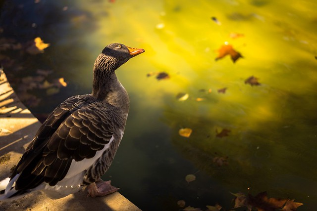 Al sol del otoño