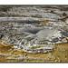 Tardy Geyser - Yellowstone NP { 1 of 2} by Helen A Jones