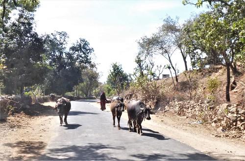 i-Kumbhagarh-Ranakpur-route (10)