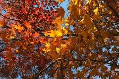 土, 2017-11-25 12:01 - New York Botanical Garden