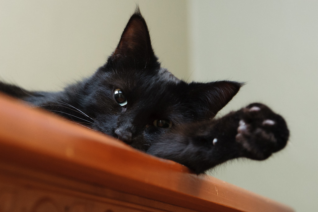 Our black cat Emma relaxes on our dresser