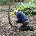 Coppicing in Coldfall Wood