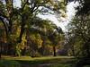 Colori d'autunno - parco