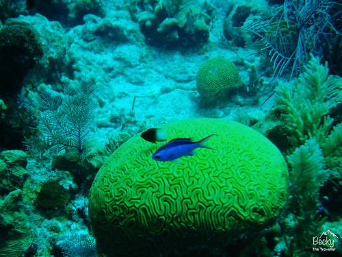 Caye Caulker Belize - amazing barrier reef my underwater shots