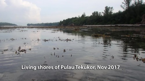 Living shores of Pulau Tekukor, Nov 2017