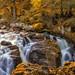 Autumn at the Black Linn Falls