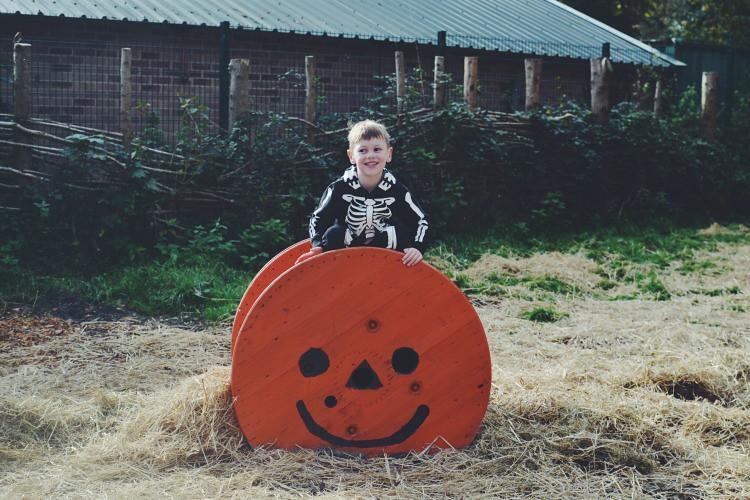 Halloween M pumpkin