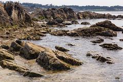 Pebble Beach Rocks