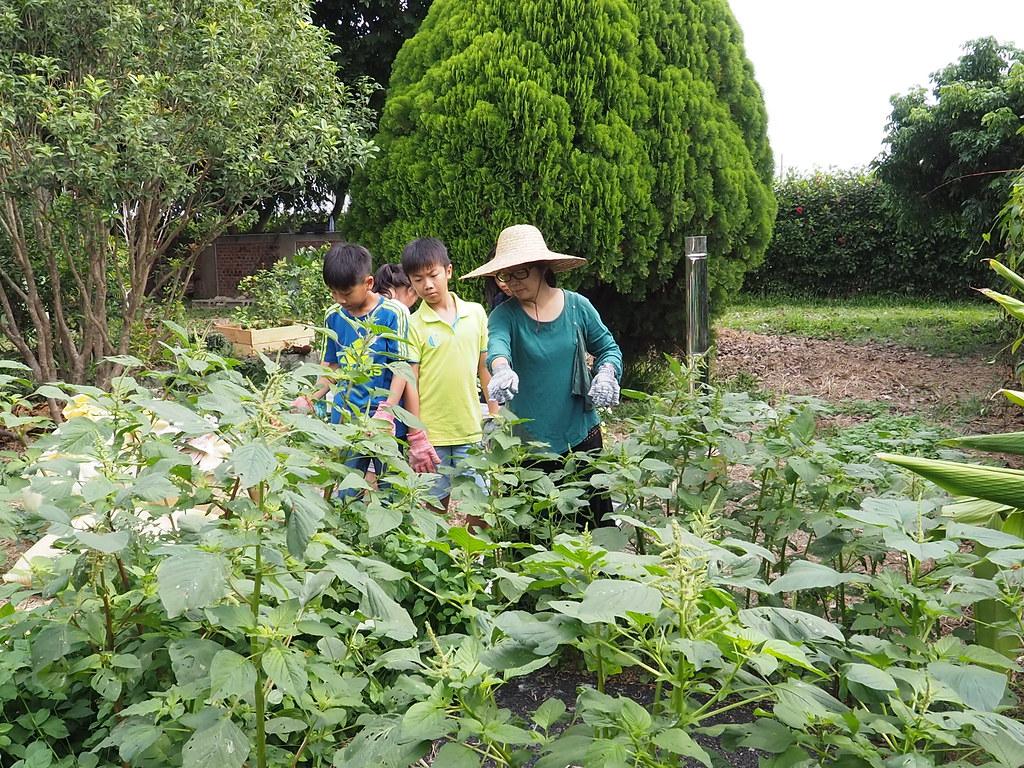 水林小秧自然農場 (15)