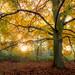 Framed Autumn Sunrise