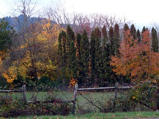 Pretty Autumn Yard ~ Several Types of Fence