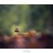 Wood Tiger by Naska Photographie