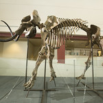 Woolly Mammoth Installation