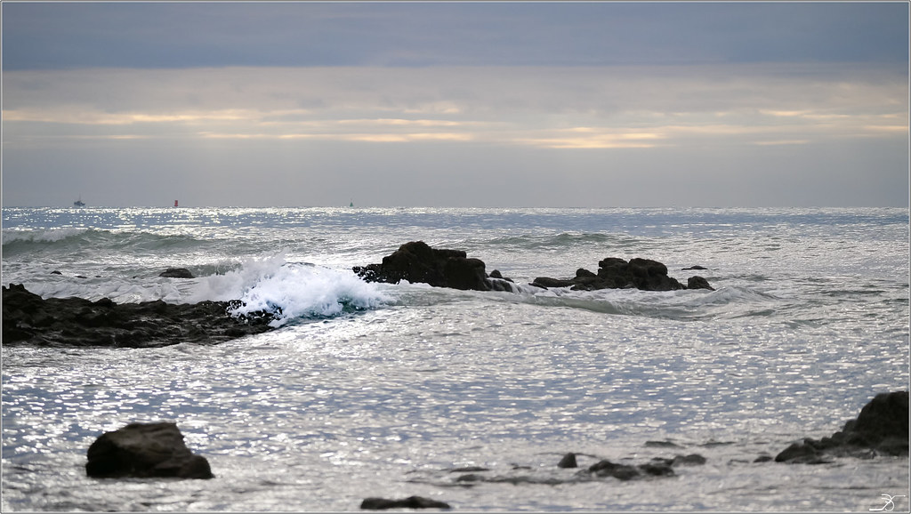 Golfe du Morbihan : le vieux loup de mer albinos 38661791356_33529f8001_b