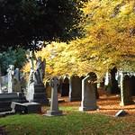 Flaybrick Autumn #2