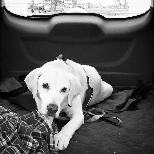 Co-pilot in black and white