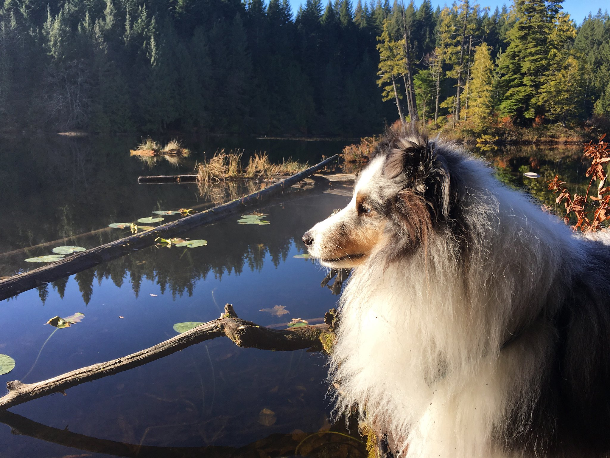 Alice Lake Hike