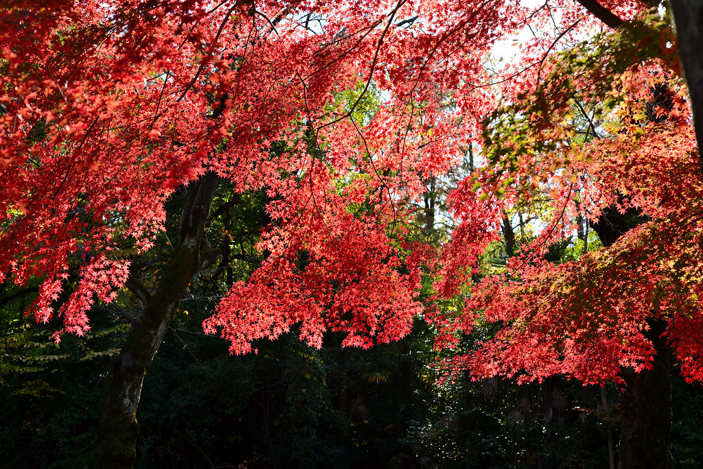 Zenpukuji Park 善福寺公園