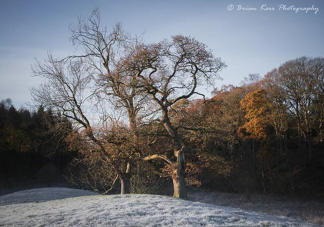 Warmth On A Cold Frosty Morning