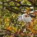 Little Egret by hisdream