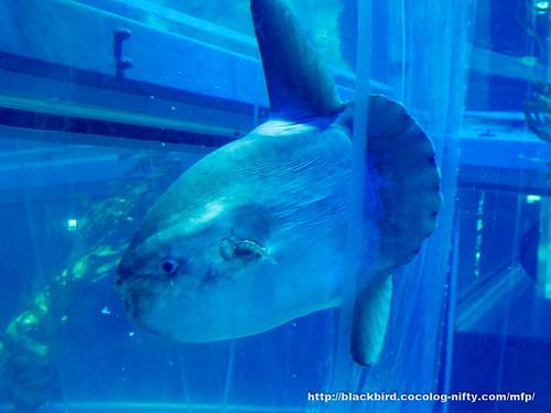Aquarium 20171115 #03