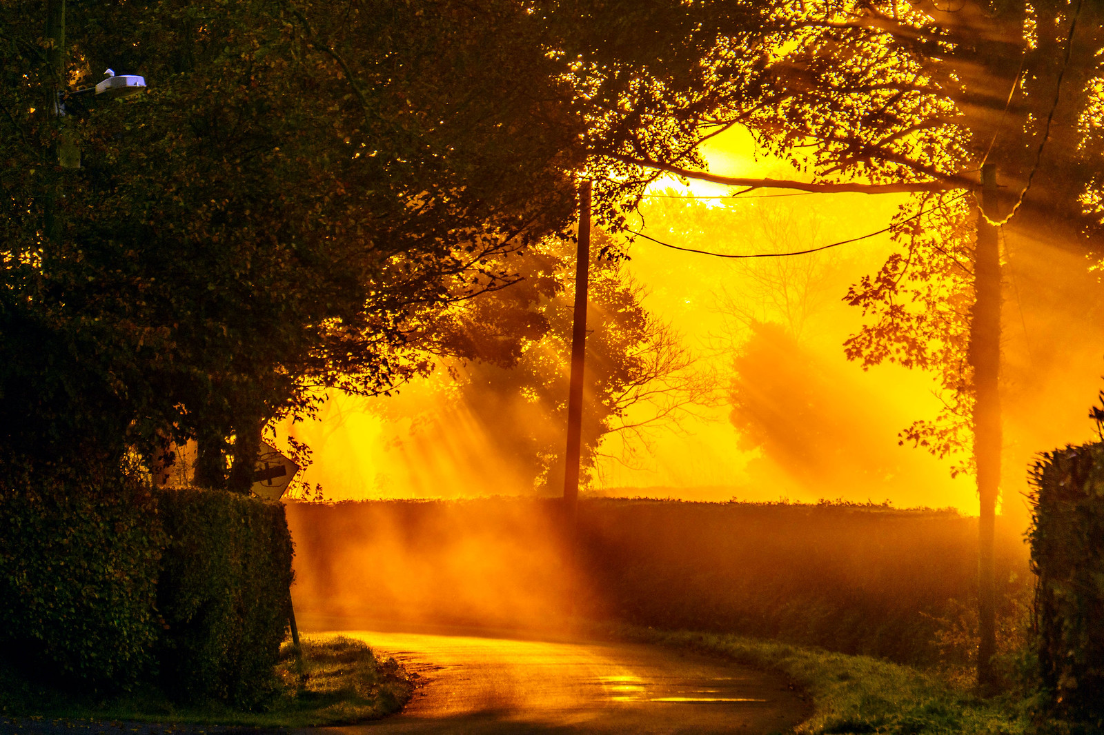 Golden Rays at Dawn