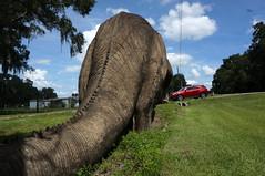 Big Brontosaurus