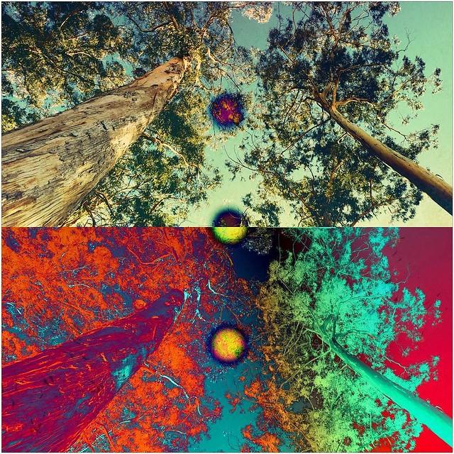 """""""Up in the trees"""" @pixiteapps #pixiteweekly #pixiteapps #pixitesource #pixiteappsaresexy #pixite @shift_by_pixite @tangentapp @layout.app @layoutfrominstagram #tangentapp #fragmentapp #skrwtapp #digitalart #digitalartist #mobileart #iosart #ipadart"""