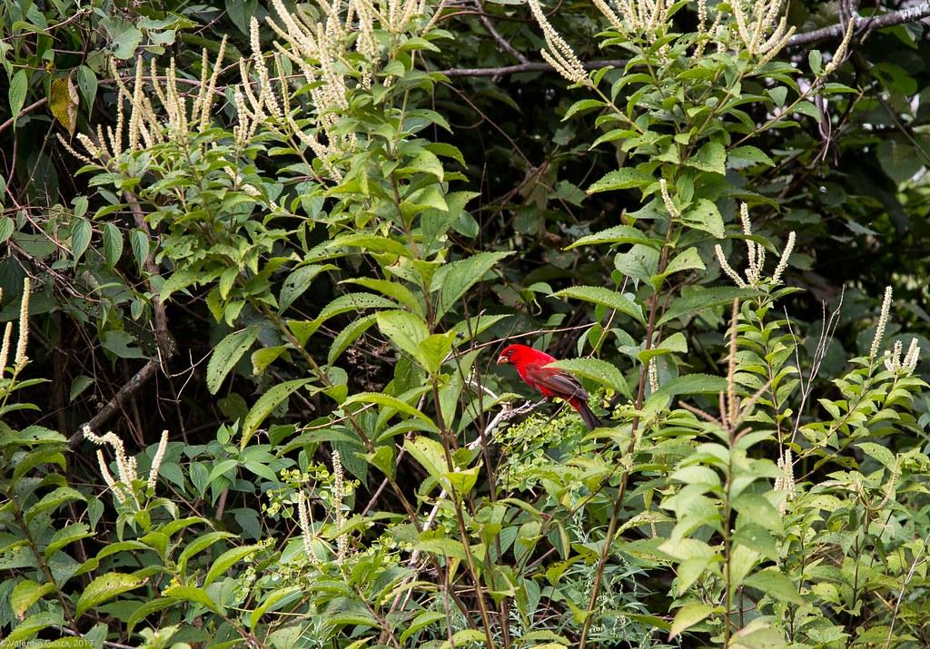 Trail to Namche 07_bird