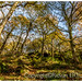 Padley Gorge -   on the outskirts of Sheffield and Grindleford in Derbyshire / Peak District - UK