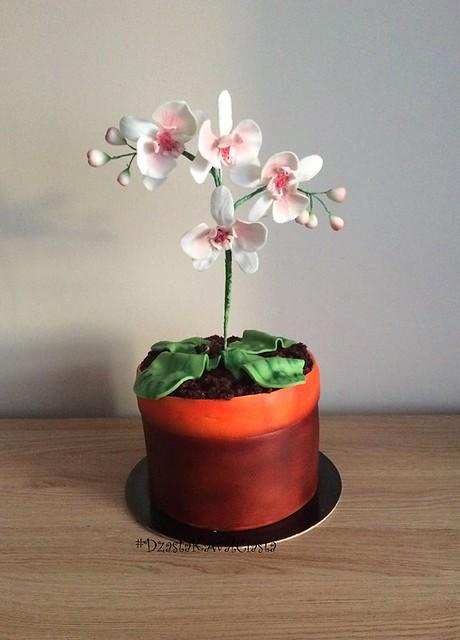 Cake by Dżasta Kawał Ciasta