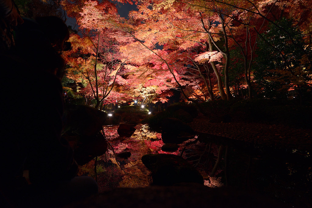 Ootaguro Park in autumn.  大田黒公園の紅葉ライトアップ